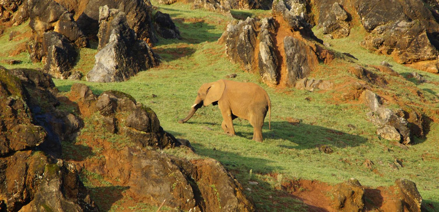 El Parque está situado en una antigua mina de hierro a cielo abierto abandonada, naturalizada por la mano del hombre, y en la que conviven más de 150 especies animales. (Foto: Parque de la Naturaleza de Cabárceno, www.parquedecabarceno.com)